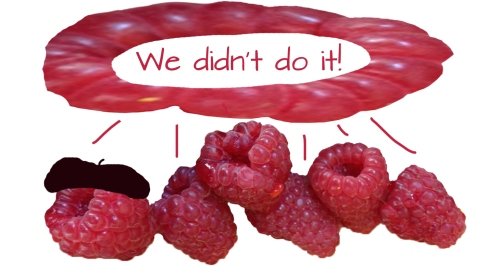 raspberries didn't do it